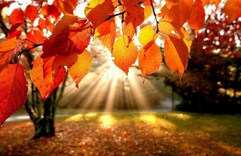 Поздравляем с первым днем осени!